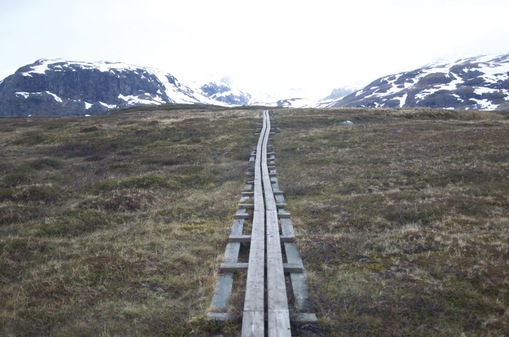 Wood Trail (Kungsleden)