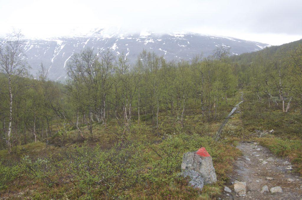 풍경이 바뀌어 작은 나무들로 구성된 숲이 나타났다.