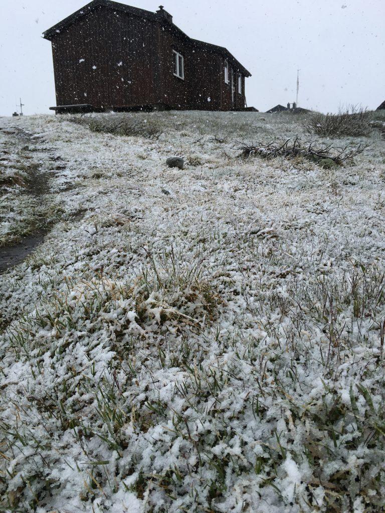 눈 내리는 여름의 Sälka
