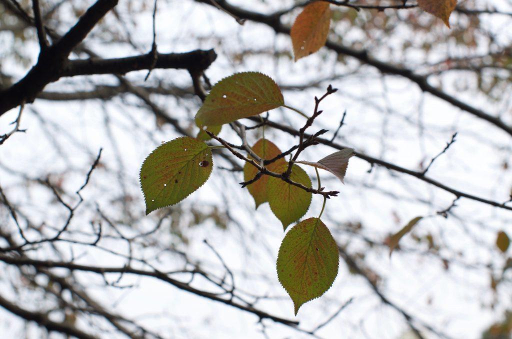 가을의 시작
