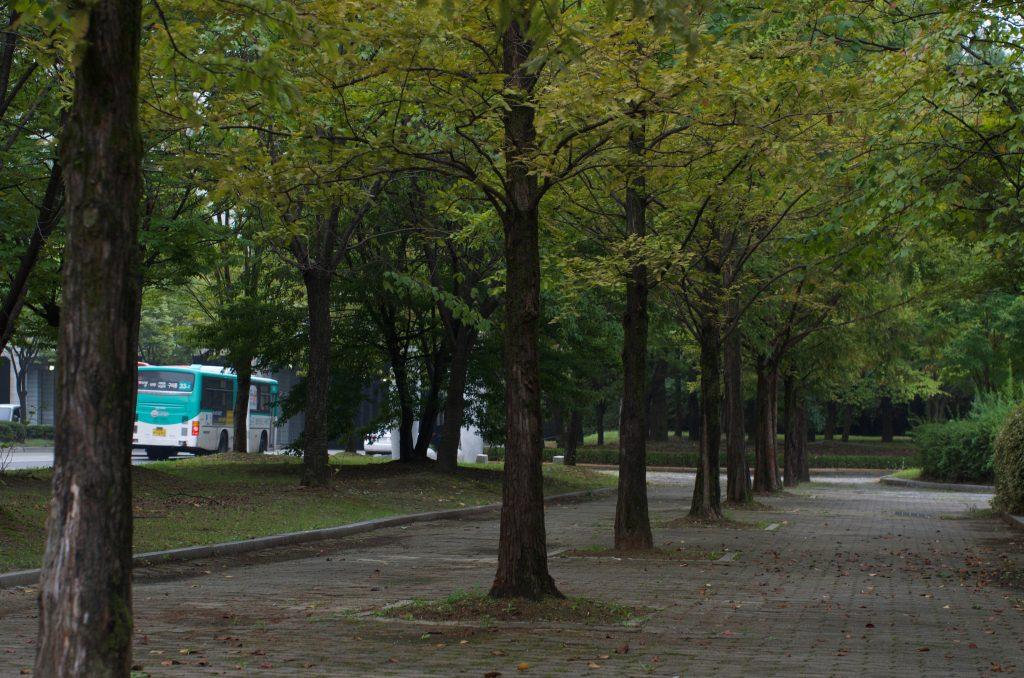 분당 중앙공원 산책로