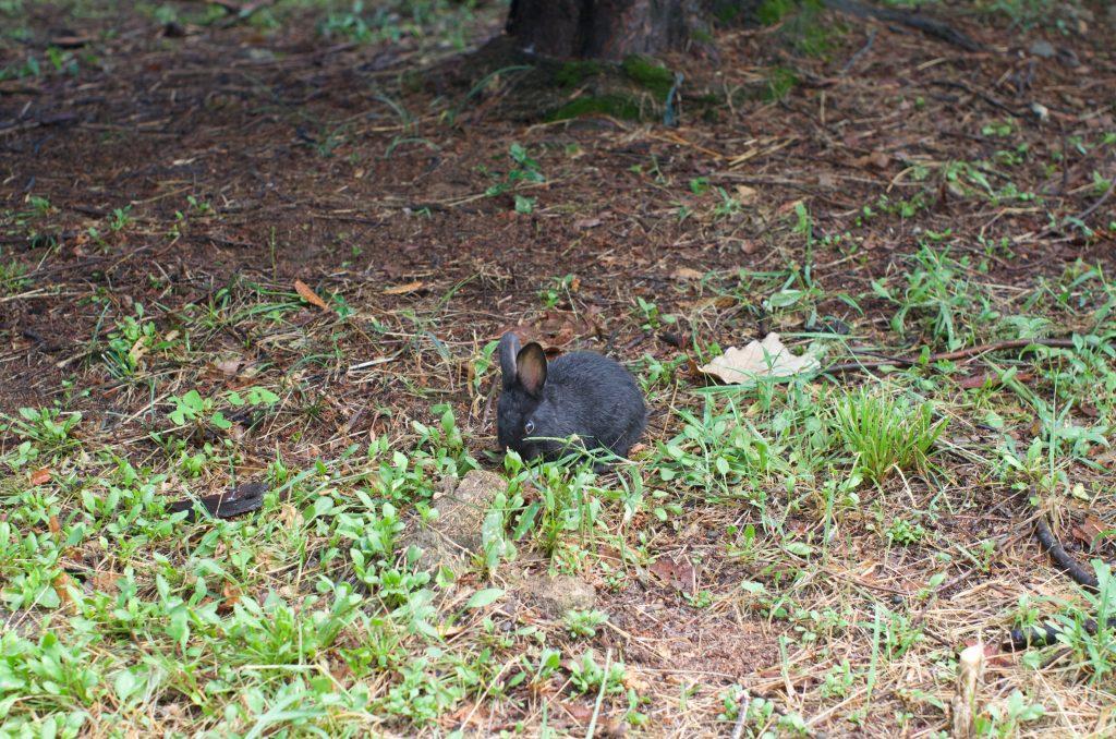 분당 중앙공원 토끼