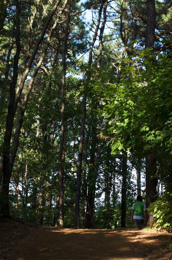 분당 중앙공원 숲길