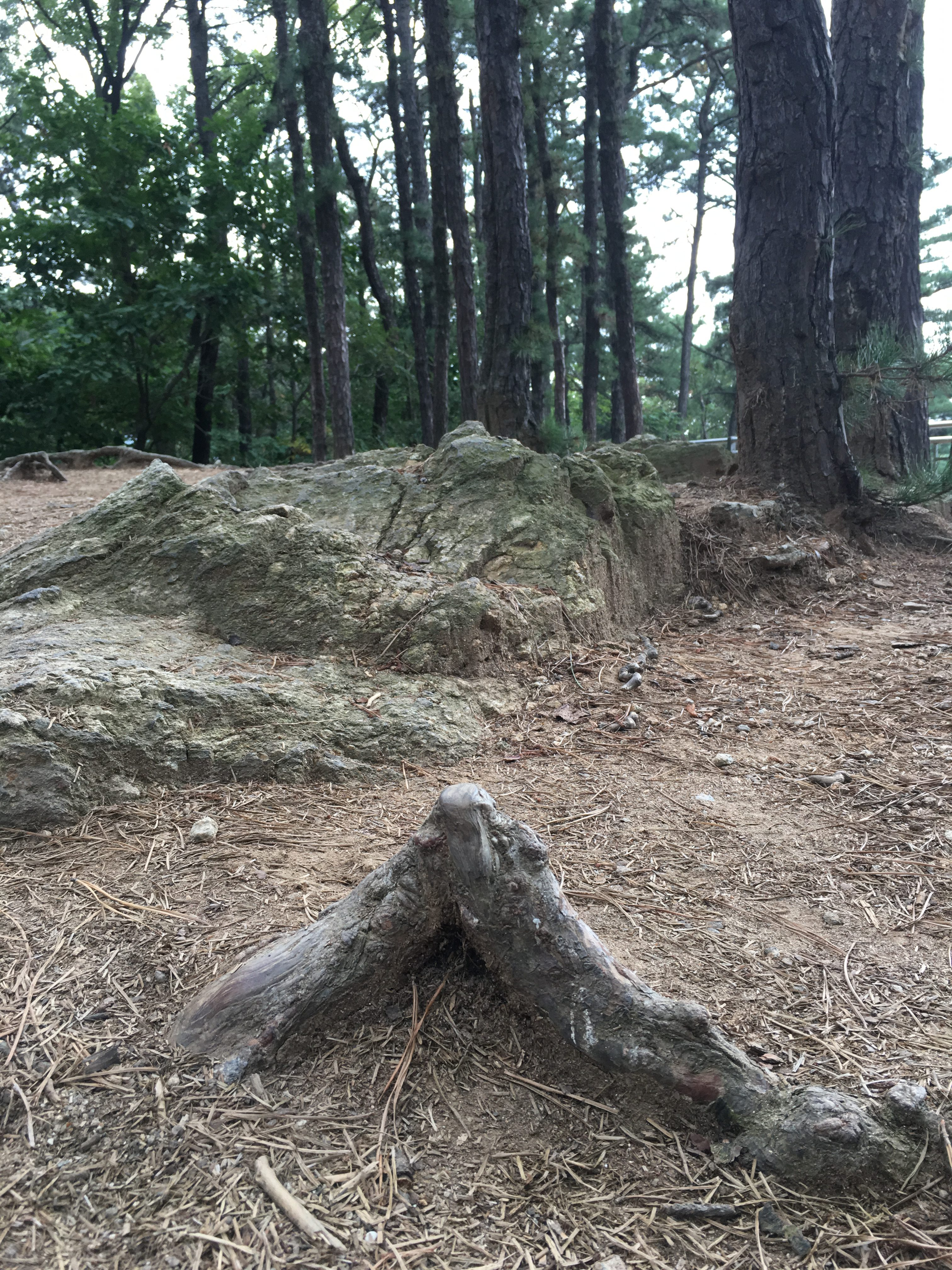분당 중앙공원 지압 뿌리