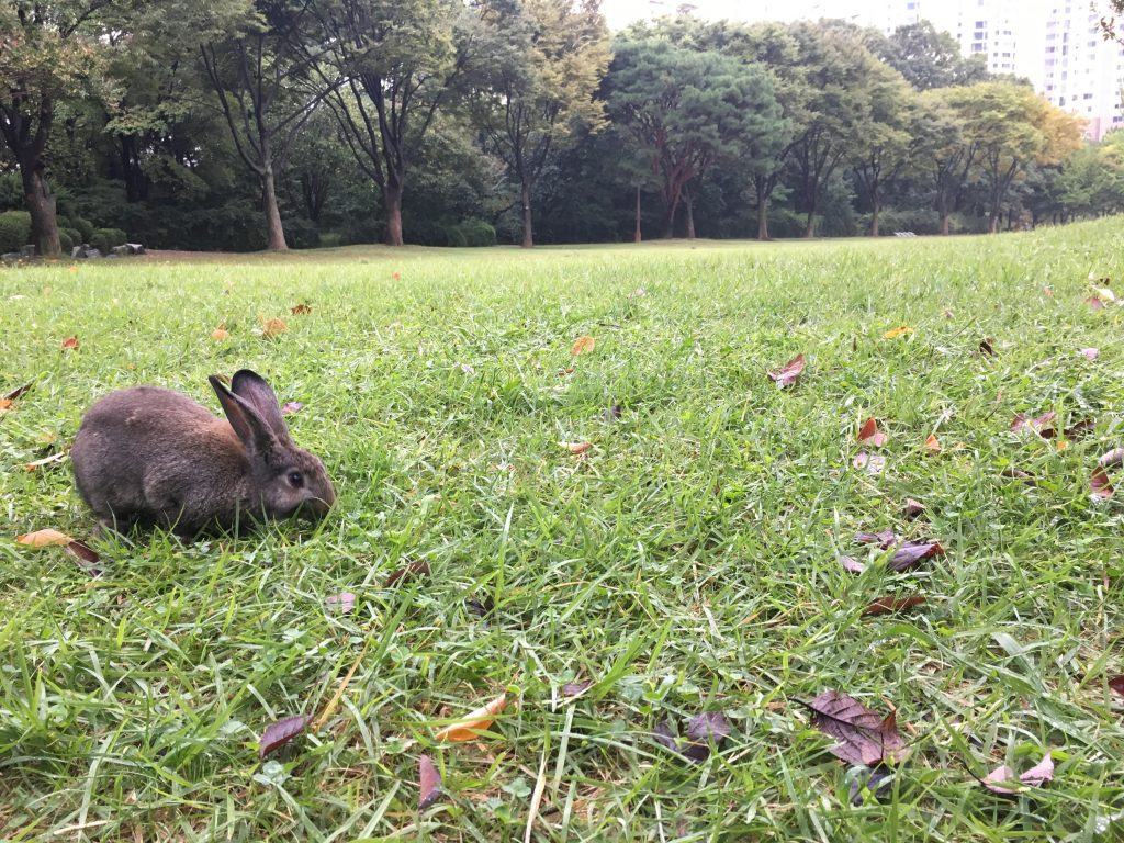 중앙공원 언덕잔디 토끼