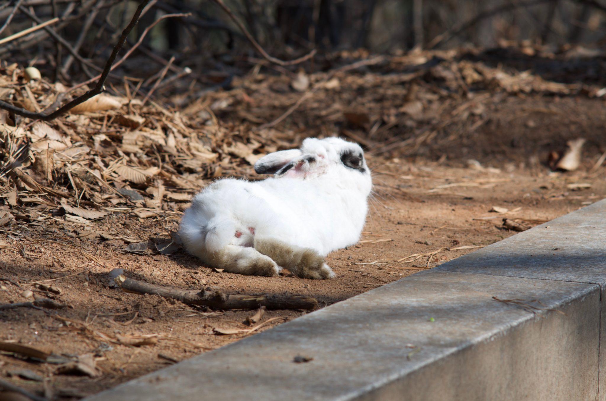 중앙공원 정상의 토끼