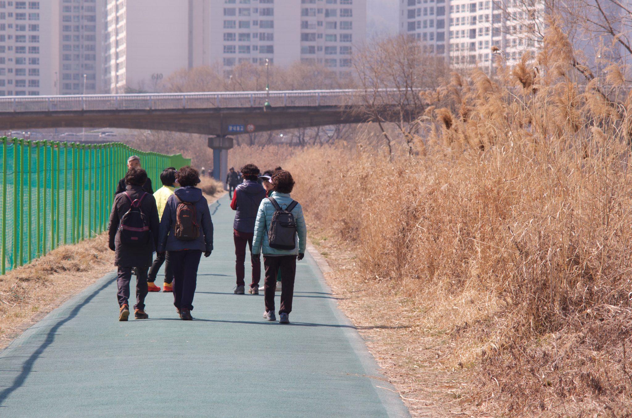 성남 탄천 봄 모습