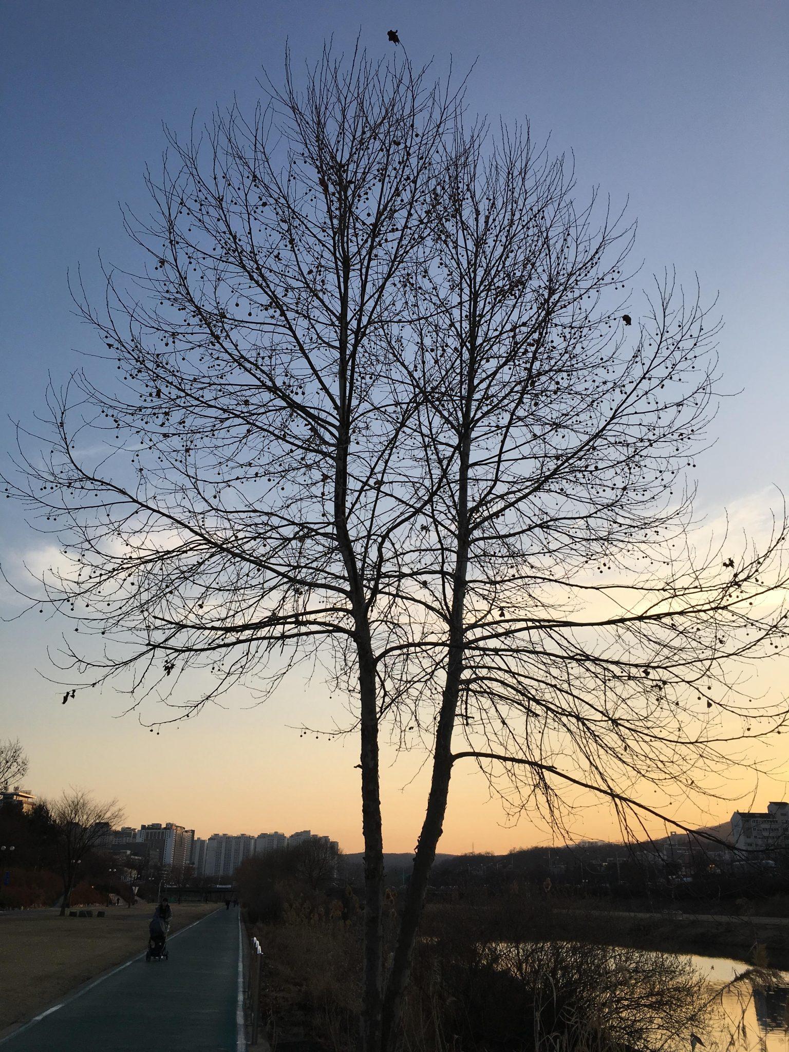 성남 탄천 산책로
