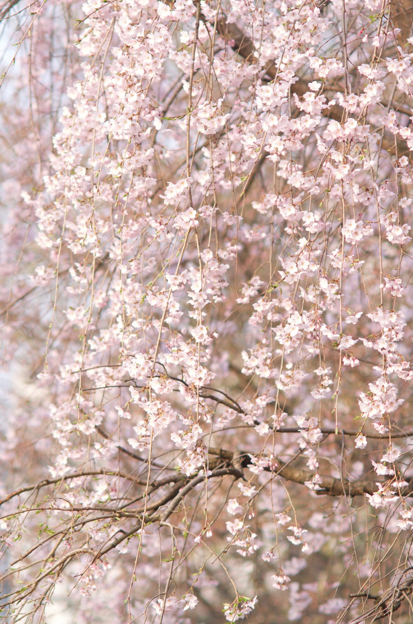 이름모를 꽃
