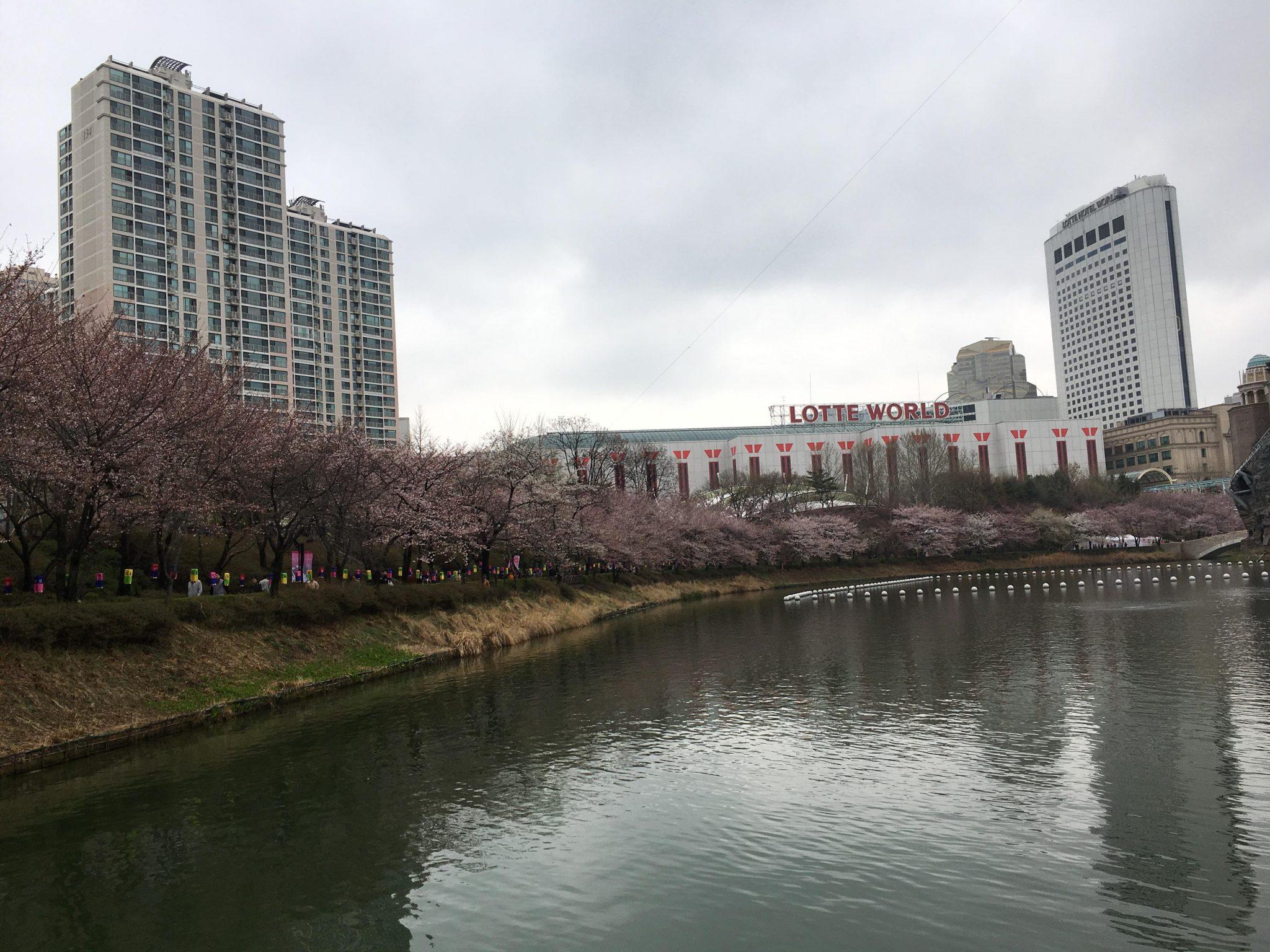 잠실 석촌호수 벚꽃 축제
