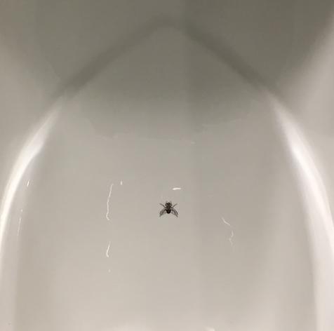 fly_in_toilet
